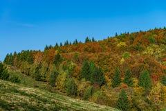 Ζωηρόχρωμα φθινοπωρινά δάση στην Αλσατία, Γαλλία Στοκ Φωτογραφίες