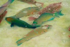 Ζωηρόχρωμα φρέσκα τροπικά ψάρια στην αγορά της Ταϊλάνδης Στοκ εικόνα με δικαίωμα ελεύθερης χρήσης