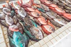Ζωηρόχρωμα φρέσκα ψάρια για την πώληση στην αγορά θαλασσινών Apia στη Σαμόα, S Στοκ Φωτογραφίες