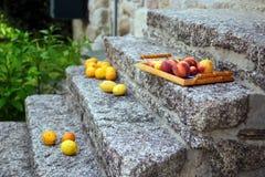 Ζωηρόχρωμα φρούτα από τα δέντρα κήπων στο δίσκο Στοκ Εικόνες