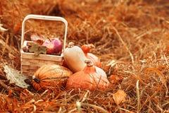 Ζωηρόχρωμα φρούτα και λαχανικά του φθινοπώρου στοκ εικόνα
