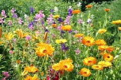 Ζωηρόχρωμα φωτεινά θερινά λουλούδια Στοκ εικόνα με δικαίωμα ελεύθερης χρήσης