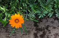 Ζωηρόχρωμα φωτεινά λουλούδια χρώματος Στοκ φωτογραφία με δικαίωμα ελεύθερης χρήσης