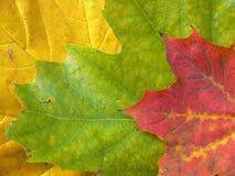 ζωηρόχρωμα φύλλα ανασκόπη&sigm Στοκ φωτογραφία με δικαίωμα ελεύθερης χρήσης