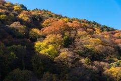 Ζωηρόχρωμα φύλλα δέντρων στο βουνό σε Arashiyama, Κιότο Στοκ εικόνα με δικαίωμα ελεύθερης χρήσης