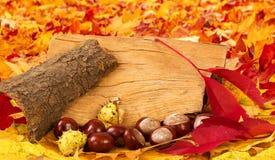 Ζωηρόχρωμα φύλλα και κάστανα φθινοπώρου Στοκ Εικόνα