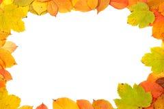 ζωηρόχρωμα φύλλα πλαισίων Στοκ Εικόνες