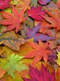 ζωηρόχρωμα φύλλα πτώσης κι&nu Στοκ εικόνα με δικαίωμα ελεύθερης χρήσης
