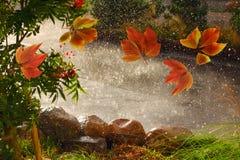 Ζωηρόχρωμα φύλλα πτώσης που φυσούν γύρω από τον καιρό βροχής φθινοπώρου ι στοκ εικόνα