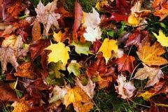 ζωηρόχρωμα φύλλα πτώσης Στοκ Εικόνες