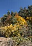 Ζωηρόχρωμα φύλλα στα δέντρα Στοκ εικόνες με δικαίωμα ελεύθερης χρήσης