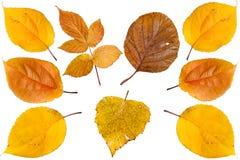 ζωηρόχρωμα φύλλα συλλογ στοκ εικόνες