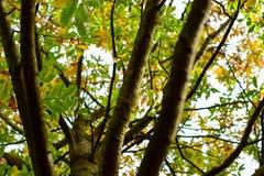 Ζωηρόχρωμα φύλλα του φθινοπώρου - Macea, Arad, Ρουμανία Στοκ Εικόνα