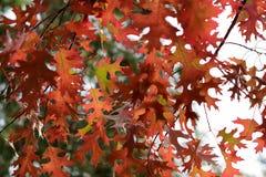 Ζωηρόχρωμα φύλλα του φθινοπώρου - Macea, Arad, Ρουμανία Στοκ φωτογραφίες με δικαίωμα ελεύθερης χρήσης