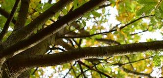 Ζωηρόχρωμα φύλλα του φθινοπώρου - Macea, Arad, Ρουμανία Στοκ φωτογραφία με δικαίωμα ελεύθερης χρήσης