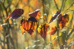 Ζωηρόχρωμα φύλλα φθινοπώρου αναδρομικά φωτισμένα σε ένα όμορφο υπόβαθρο Στοκ Εικόνες
