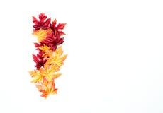 Ζωηρόχρωμα φύλλα φθινοπώρου που απομονώνονται στο λευκό Στοκ φωτογραφία με δικαίωμα ελεύθερης χρήσης