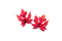 Ζωηρόχρωμα φύλλα φθινοπώρου που απομονώνονται στο λευκό Στοκ Εικόνες