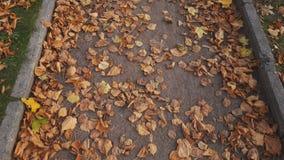 Ζωηρόχρωμα φύλλα φθινοπώρου στην πορεία πάρκων πόλεων, πάροδος, υπόβαθρο διαβάσεων απόθεμα βίντεο