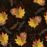 ζωηρόχρωμα φύλλα φθινοπώρ&omicr Στοκ εικόνες με δικαίωμα ελεύθερης χρήσης