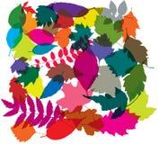 ζωηρόχρωμα φύλλα διανυσματική απεικόνιση