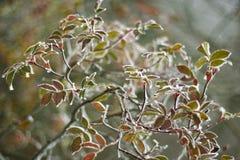 Ζωηρόχρωμα φύλλα στοκ φωτογραφίες