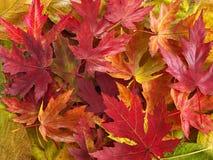 ζωηρόχρωμα φύλλα Στοκ εικόνα με δικαίωμα ελεύθερης χρήσης