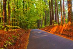 Ζωηρόχρωμα φύλλα δασικών δέντρων φθινοπώρου οδικών βαθών στοκ φωτογραφία με δικαίωμα ελεύθερης χρήσης
