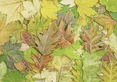 Ζωηρόχρωμα φύλλα πτώσης για ένα υπόβαθρο φθινοπώρου Στοκ Εικόνες
