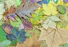 Ζωηρόχρωμα φύλλα πτώσης για ένα υπόβαθρο φθινοπώρου Στοκ Εικόνα