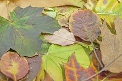 Ζωηρόχρωμα φύλλα πτώσης για ένα υπόβαθρο φθινοπώρου Στοκ εικόνες με δικαίωμα ελεύθερης χρήσης
