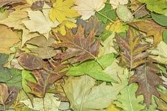 Ζωηρόχρωμα φύλλα πτώσης για ένα υπόβαθρο φθινοπώρου Στοκ φωτογραφίες με δικαίωμα ελεύθερης χρήσης