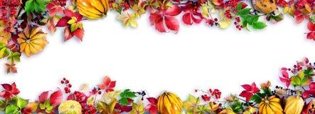 Ζωηρόχρωμα φύλλα πτώσης στο λευκό - φθινόπωρο Στοκ εικόνες με δικαίωμα ελεύθερης χρήσης