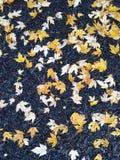 ζωηρόχρωμα φύλλα πτώσης Στοκ εικόνες με δικαίωμα ελεύθερης χρήσης