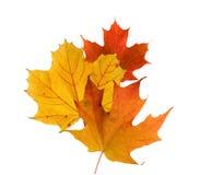 ζωηρόχρωμα φύλλα πτώσης Στοκ Εικόνα