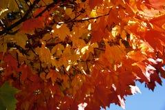 ζωηρόχρωμα φύλλα πτώσης Στοκ Φωτογραφίες