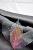 Ζωηρόχρωμα φύλλα σκελετών Στοκ φωτογραφία με δικαίωμα ελεύθερης χρήσης