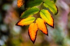 Ζωηρόχρωμα φύλλα στον κήπο Στοκ εικόνες με δικαίωμα ελεύθερης χρήσης