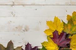 Ζωηρόχρωμα φύλλα φθινοπώρου κίτρινος, πράσινος και καφετής Στοκ φωτογραφία με δικαίωμα ελεύθερης χρήσης
