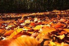 Ζωηρόχρωμα φύλλα φθινοπώρου πορτοκαλιοί κίτρινος και καφετής Στοκ Φωτογραφίες