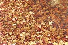 Ζωηρόχρωμα φύλλα φθινοπώρου στην ημέρα Στοκ Εικόνα