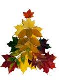 Ζωηρόχρωμα φύλλα φθινοπώρου στο άσπρο υπόβαθρο στοκ εικόνα με δικαίωμα ελεύθερης χρήσης