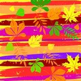 ζωηρόχρωμα φύλλα φθινοπώρ&omicr διάνυσμα isolated leaf maple Φύλλα φθινοπώρου Grunge Στοκ εικόνες με δικαίωμα ελεύθερης χρήσης