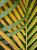 Ζωηρόχρωμα φύλλα φοινικών Στοκ φωτογραφία με δικαίωμα ελεύθερης χρήσης