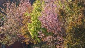 Ζωηρόχρωμα χαρωπά δέντρα ανθών Στοκ φωτογραφία με δικαίωμα ελεύθερης χρήσης