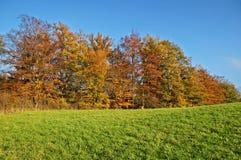 Ζωηρόχρωμα χρώματα φθινοπώρου αποβαλλόμενων δέντρων του πορτοκαλιού στα πράσινα λιβάδια οριζόντων Στοκ εικόνα με δικαίωμα ελεύθερης χρήσης
