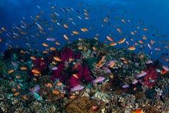 Ζωηρόχρωμα ψάρια και κοραλλιογενής ύφαλος Στοκ εικόνες με δικαίωμα ελεύθερης χρήσης