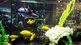 Ζωηρόχρωμα ψάρια στη μεγάλη δεξαμενή ψαριών φιλμ μικρού μήκους