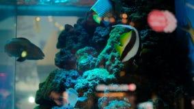 Ζωηρόχρωμα ψάρια στο όμορφο ενυδρείο απόθεμα βίντεο