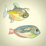 ζωηρόχρωμα ψάρια τροπικά Ελεύθερη απεικόνιση δικαιώματος